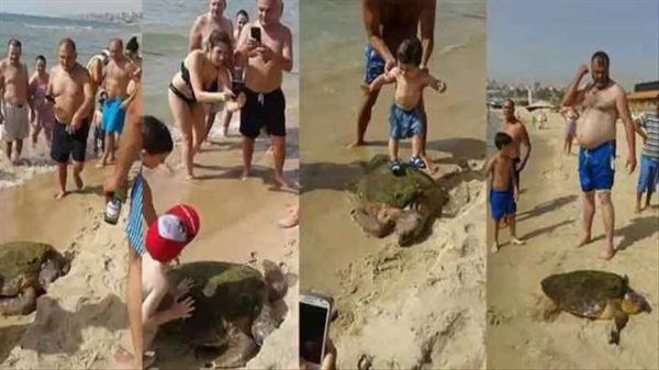 Tourists Break Endangered Sea Turtle's Bones