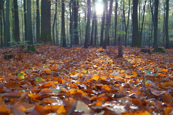 A Case For Fallen Leaves