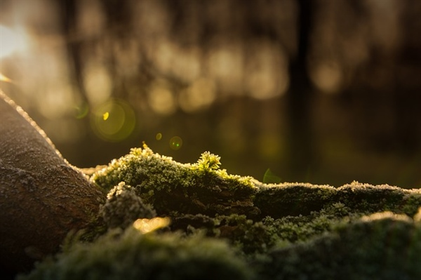 How a Simple Plant Can Save The Environment: The Benefits of Moss